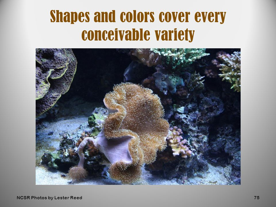Shapes and colors cover every conceivable variety NCSR Photos by Lester Reed75