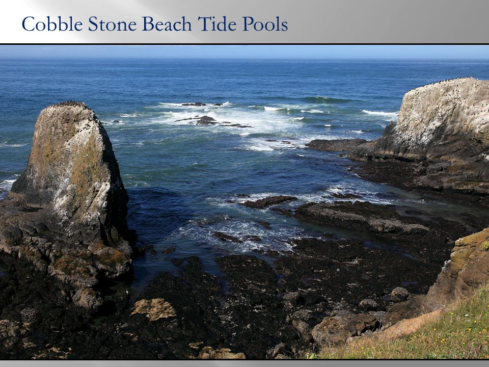 Cobble Stone Beach Tide Pools