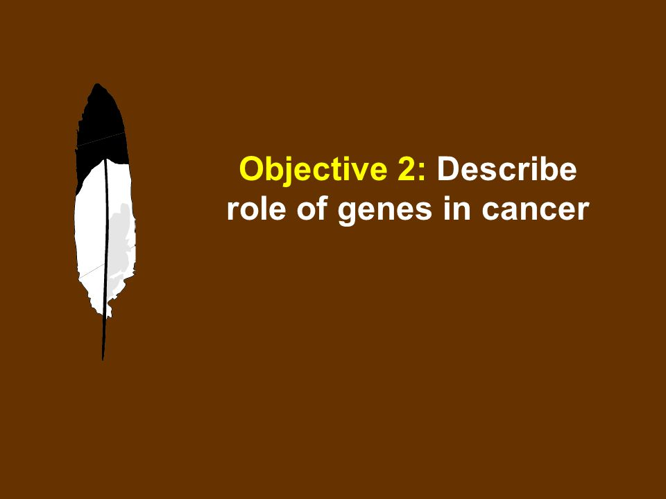 Objective 2: Describe role of genes in cancer