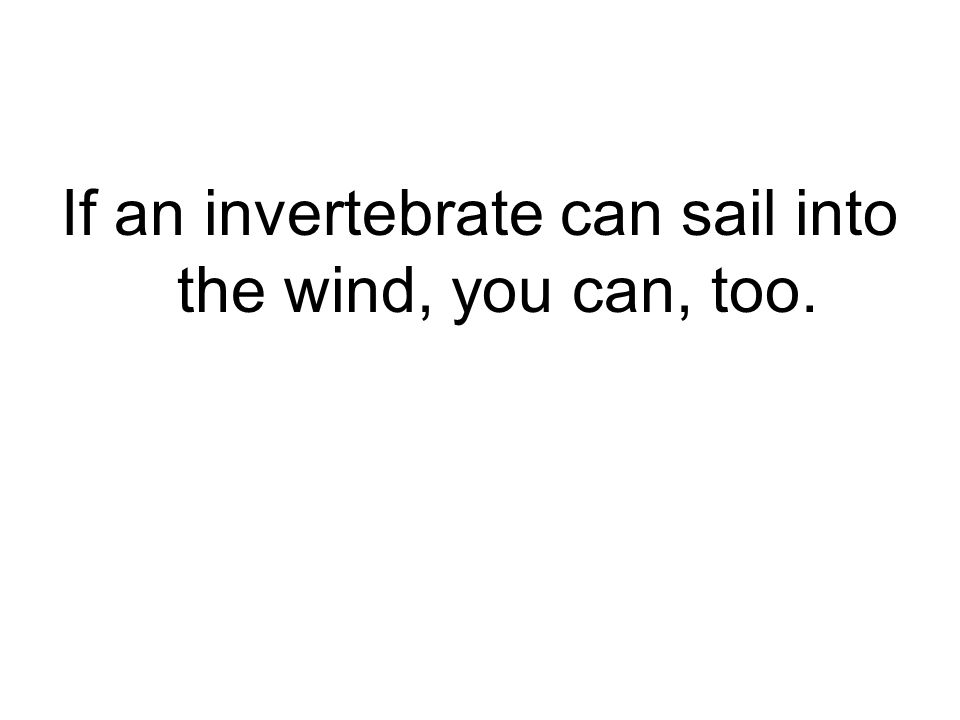 If an invertebrate can sail into the wind, you can, too.