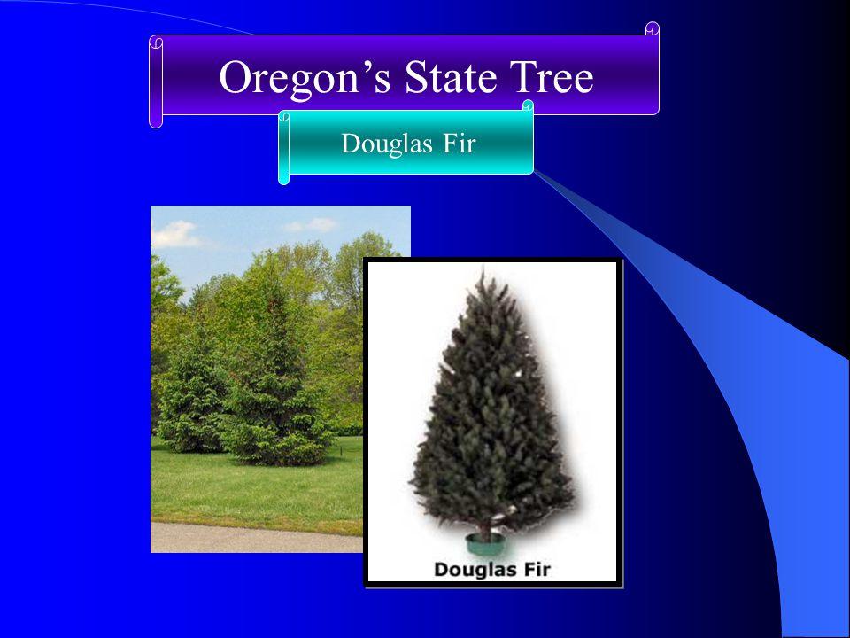 Oregon's State Tree Douglas Fir