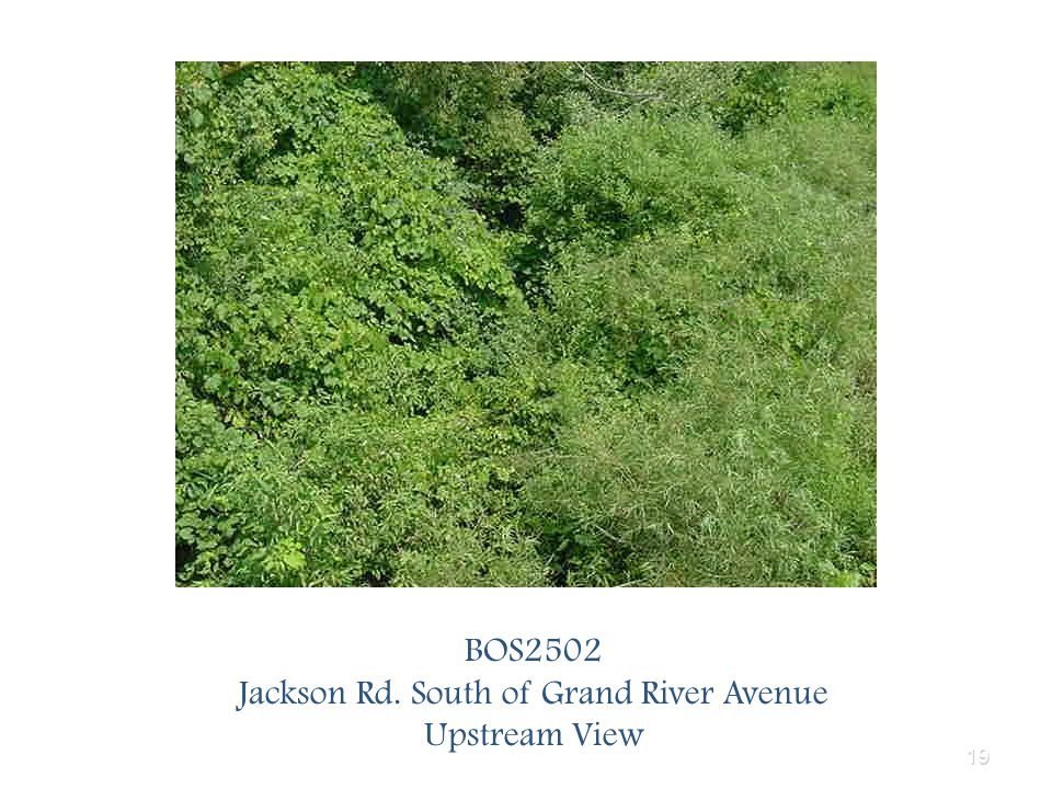 19 BOS2502 Jackson Rd. South of Grand River Avenue Upstream View