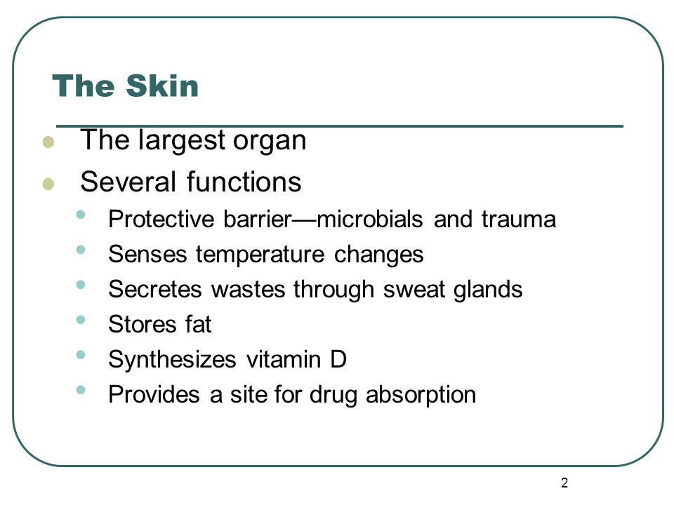 2 The Skin The largest organ Several functions Protective barrier—microbials and trauma Senses temperature changes Secretes wastes through sweat glands Stores fat Synthesizes vitamin D Provides a site for drug absorption