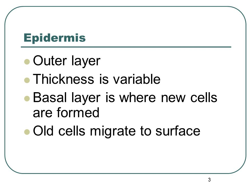 3 Epidermis Outer layer Thickness is variable Basal layer is where new cells are formed Old cells migrate to surface