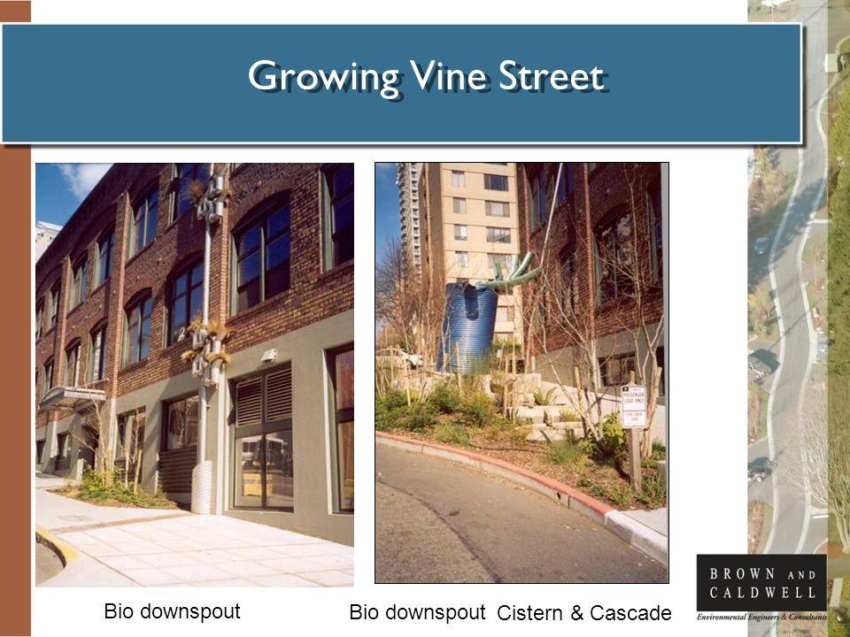 Growing Vine Street Cistern & Cascade Bio downspout