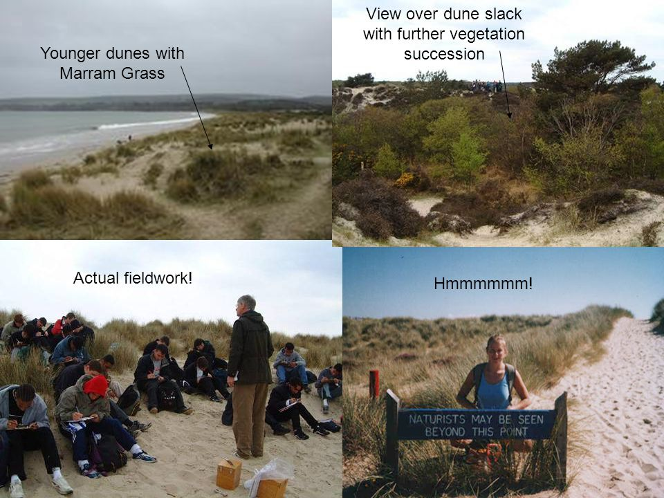View over dune slack with further vegetation succession Younger dunes with Marram Grass Actual fieldwork.