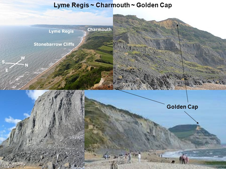 The cliff top at Black Ven Black Ven between Lyme Regis and Charmouth.