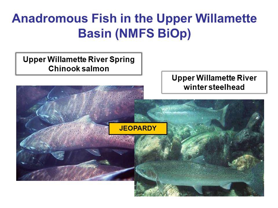 Upper Willamette River Spring Chinook salmon Upper Willamette River winter steelhead Anadromous Fish in the Upper Willamette Basin (NMFS BiOp) JEOPARD