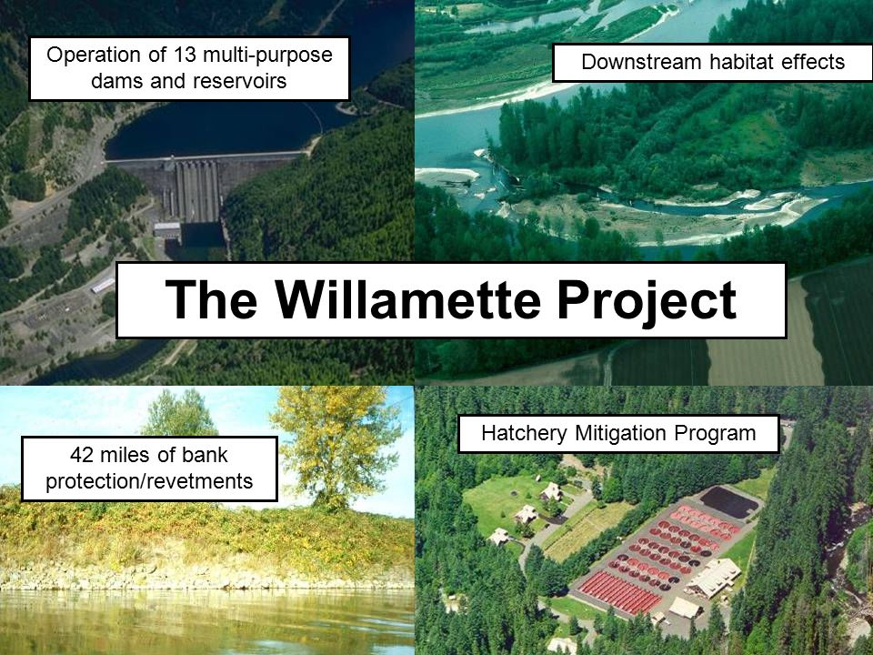 42 miles of bank protection/revetments Downstream habitat effects Operation of 13 multi-purpose dams and reservoirs The Willamette Project Hatchery Mi