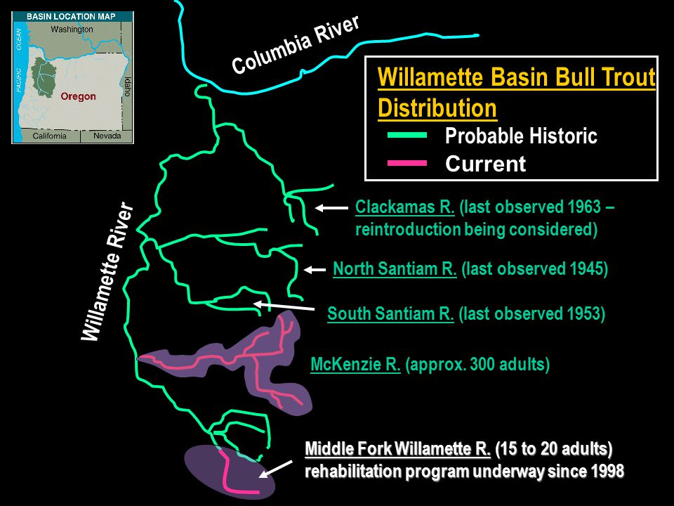 Columbia River Willamette River Clackamas R. (last observed 1963 – reintroduction being considered) North Santiam R. (last observed 1945) McKenzie R.