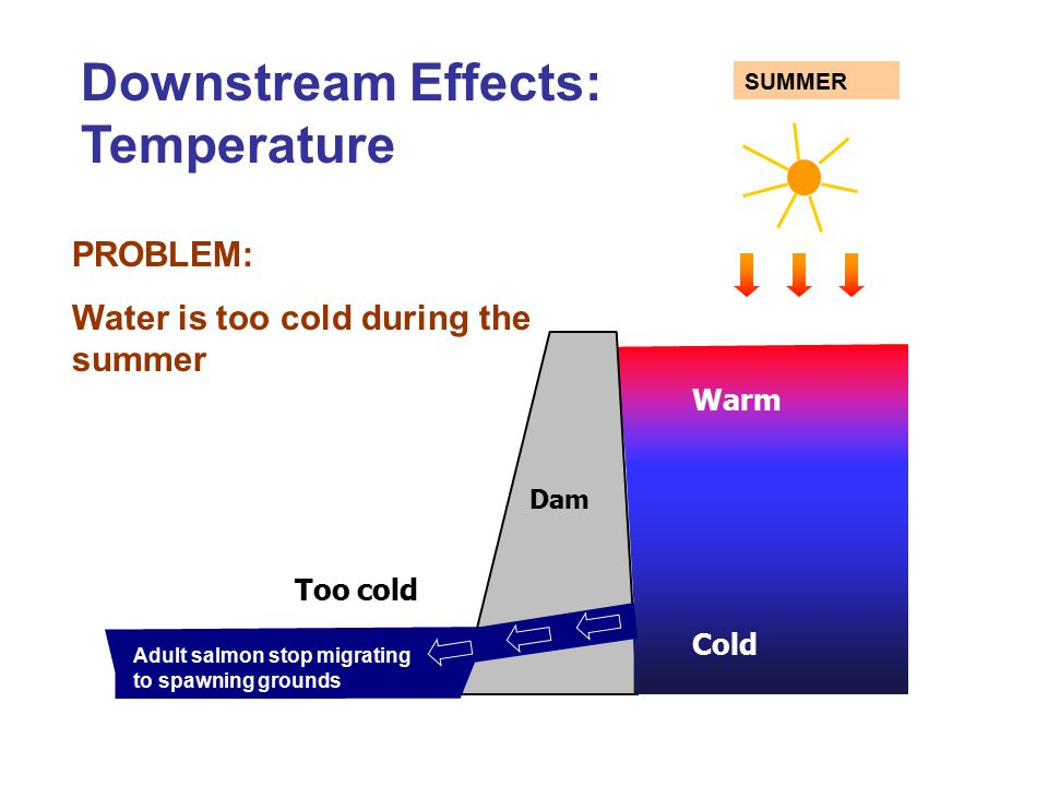 Warm Cold Dam Too cold Downstream Effects: Temperature PROBLEM: Water is too cold during the summer SUMMER Adult salmon stop migrating to spawning gro