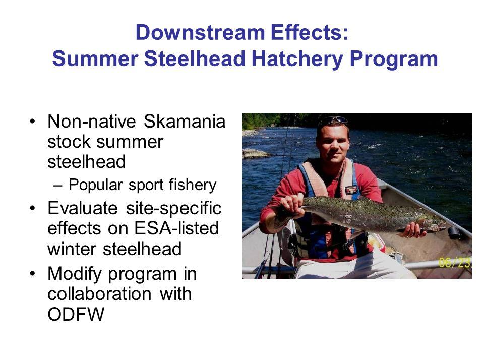 Downstream Effects: Summer Steelhead Hatchery Program Non-native Skamania stock summer steelhead –Popular sport fishery Evaluate site-specific effects