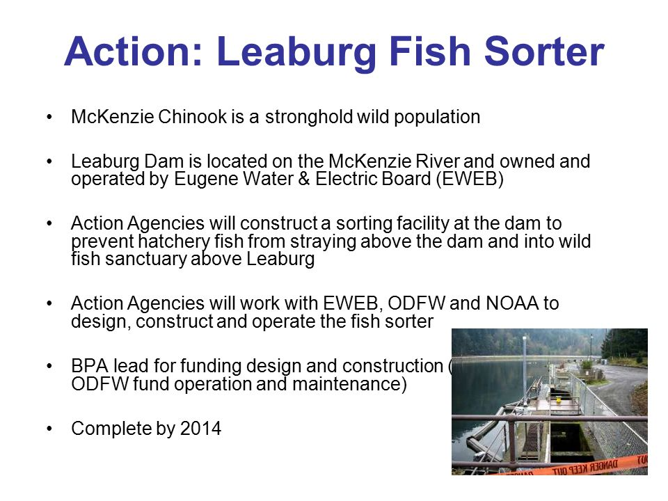 Action: Leaburg Fish Sorter McKenzie Chinook is a stronghold wild population Leaburg Dam is located on the McKenzie River and owned and operated by Eu