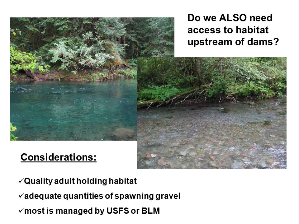 Quality adult holding habitat adequate quantities of spawning gravel most is managed by USFS or BLM Do we ALSO need access to habitat upstream of dams