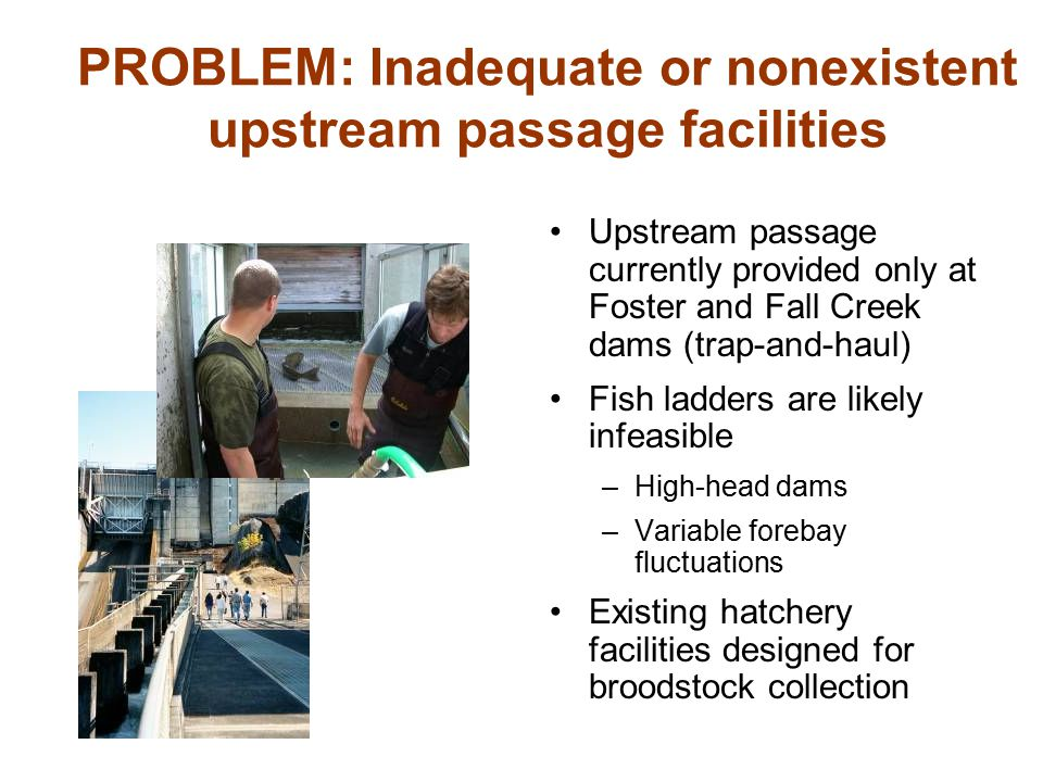 PROBLEM: Inadequate or nonexistent upstream passage facilities Upstream passage currently provided only at Foster and Fall Creek dams (trap-and-haul)