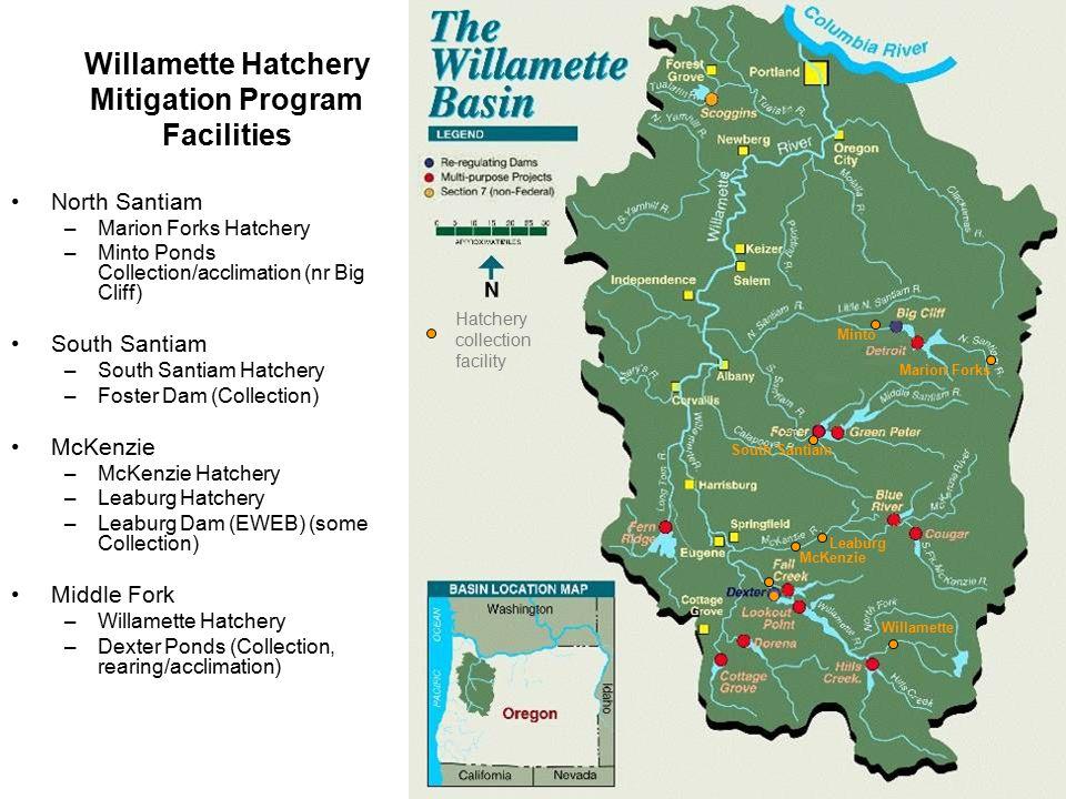 Willamette Hatchery Mitigation Program Facilities North Santiam –Marion Forks Hatchery –Minto Ponds Collection/acclimation (nr Big Cliff) South Santia