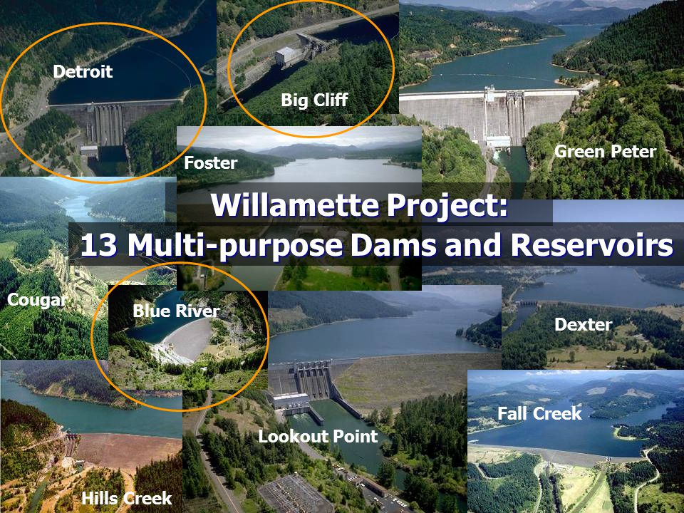 13 Multi-Purpose Dams and Reservoirs Located in tributaries, not on mainstem Willamette River Most are large, high-head dams