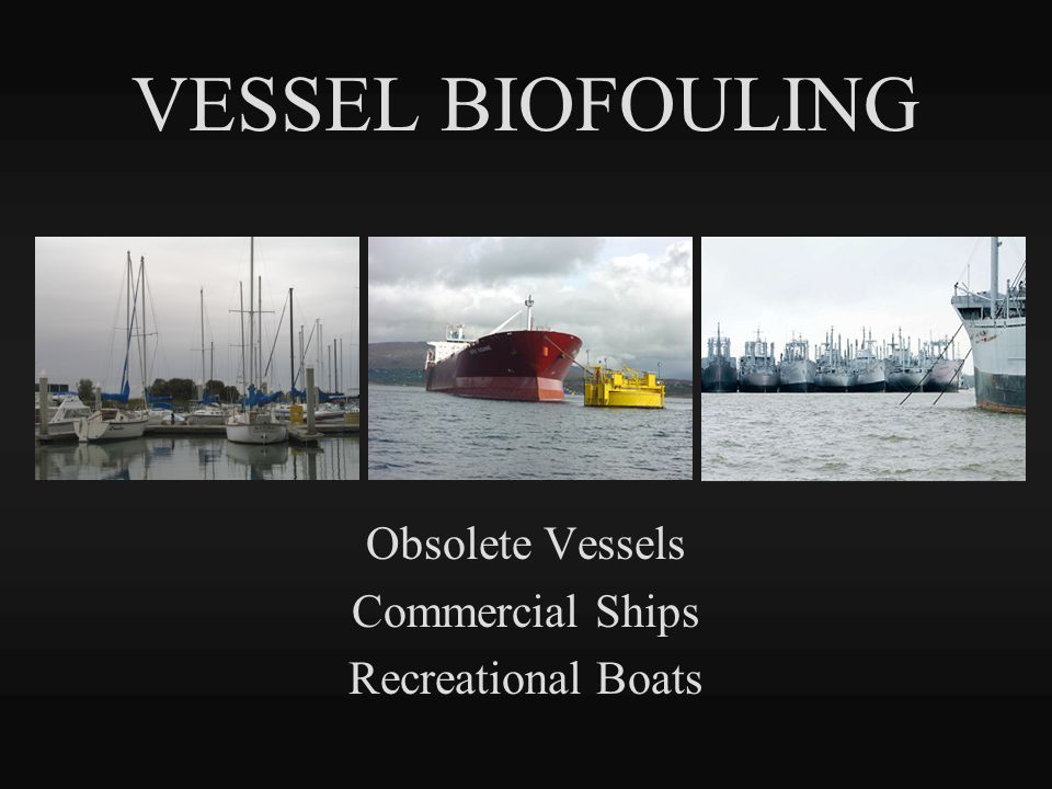 VESSEL BIOFOULING Obsolete Vessels Commercial Ships Recreational Boats
