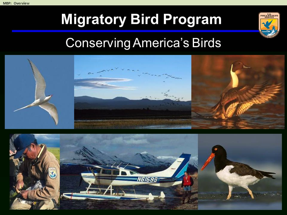 Conserving America's Birds