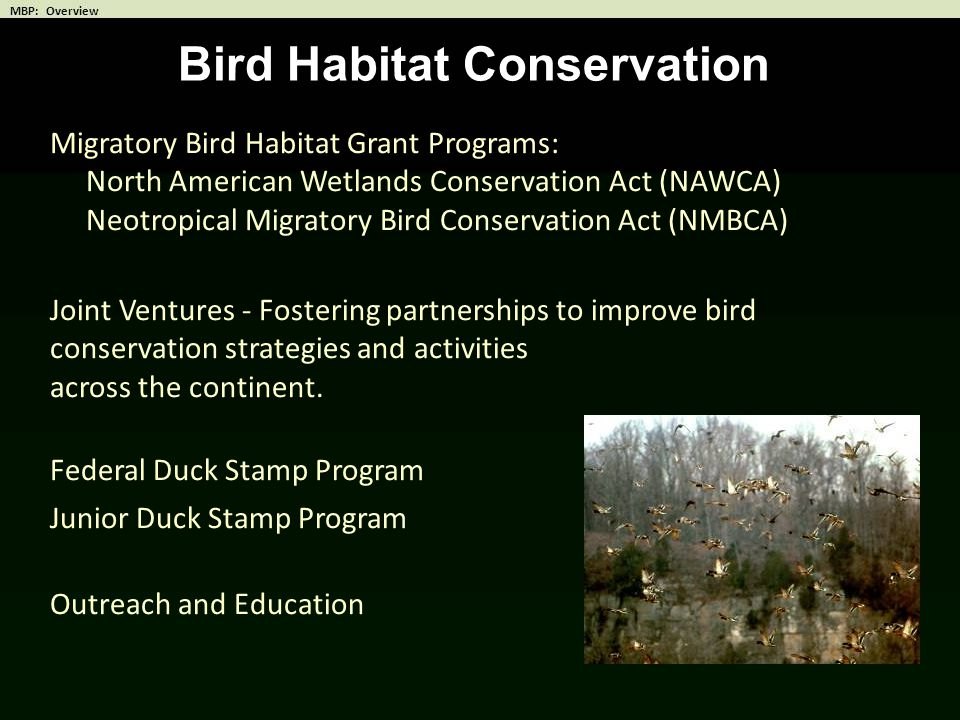 Bird Habitat Conservation Migratory Bird Habitat Grant Programs: North American Wetlands Conservation Act (NAWCA) Neotropical Migratory Bird Conservat