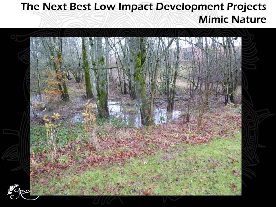 Depaving & Tree Planting SE 12 th & Division, Portland, OR