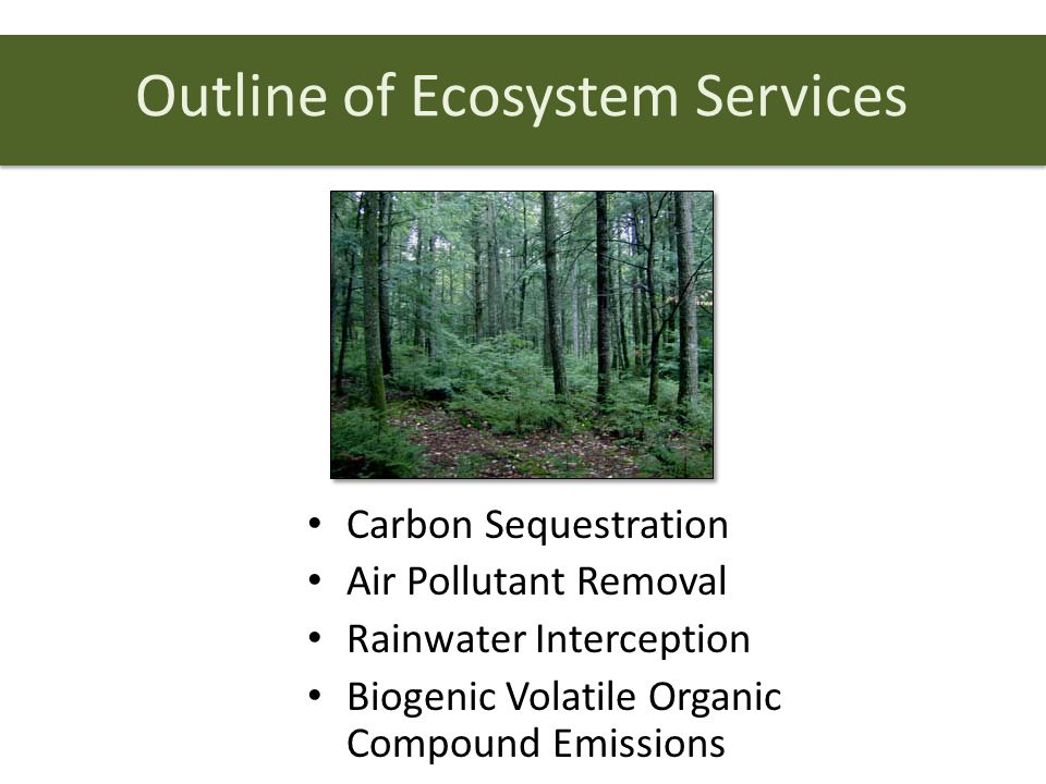 Outline of Ecosystem Services Carbon Sequestration Air Pollutant Removal Rainwater Interception Biogenic Volatile Organic Compound Emissions