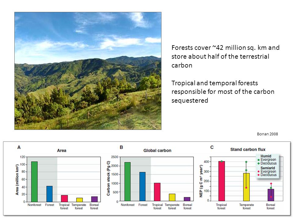 Approximately 33% of anthropogenic carbon dioxide emissions are sequestered from forests (Bonan 2008)
