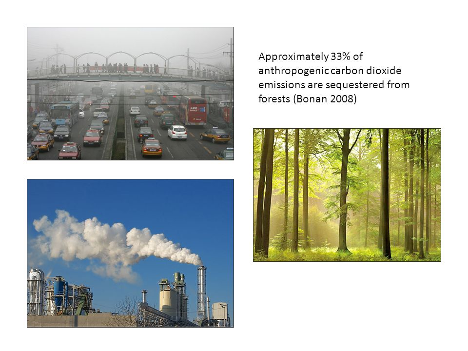 Project Description At 5, 10, and 20 Years from Planting, Project: Carbon sequestration and carbon storage Air pollutants removal (specifically NO 2, SO 2, Particulate Matter (PM), and Volatile Organic Compounds (BVOC)) Rainfall interception