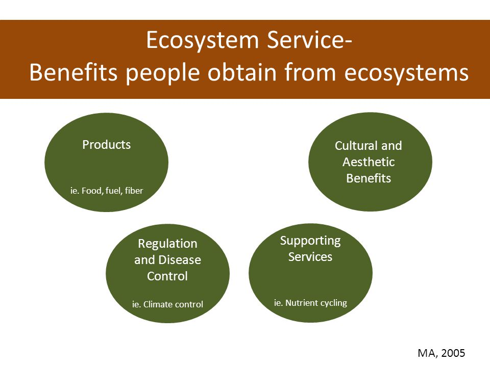 What are the Ecosystem Services of an Urban Forest.