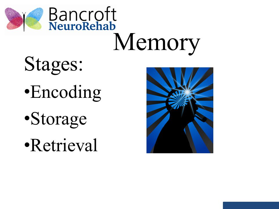 Memory Stages: Encoding Storage Retrieval