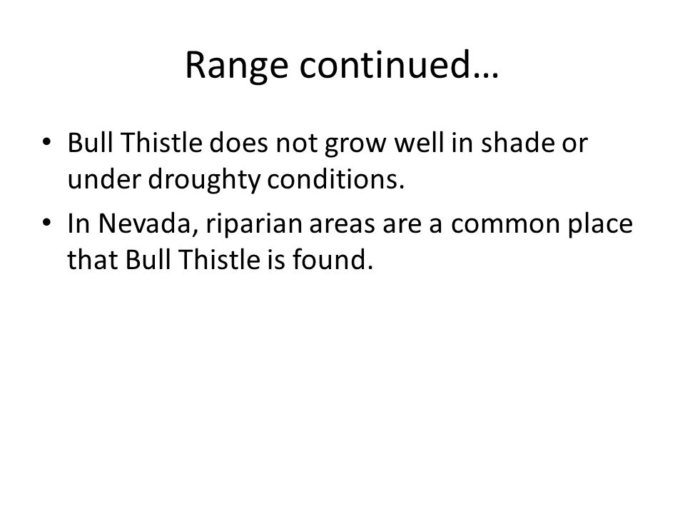 Range continued… Bull Thistle does not grow well in shade or under droughty conditions.