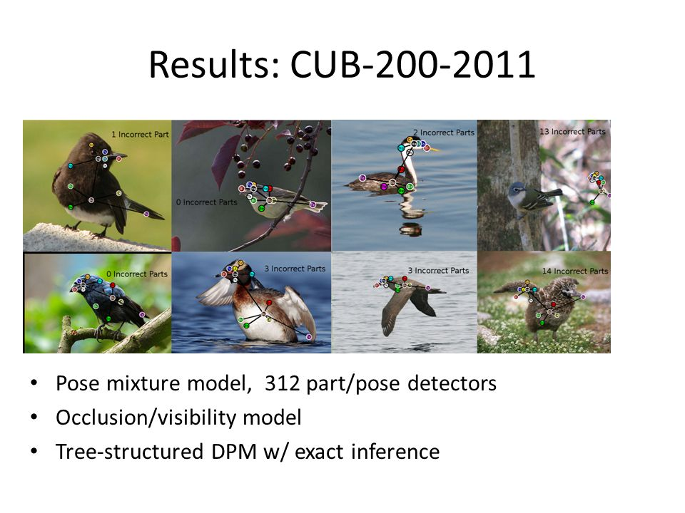 Results: CUB-200-2011 Pose mixture model, 312 part/pose detectors Occlusion/visibility model Tree-structured DPM w/ exact inference