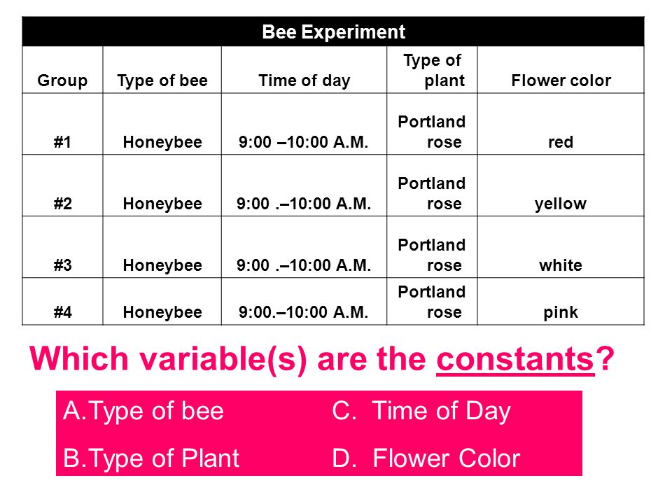 Bee Experiment GroupType of beeTime of day Type of plantFlower color #1Honeybee9:00 –10:00 A.M.