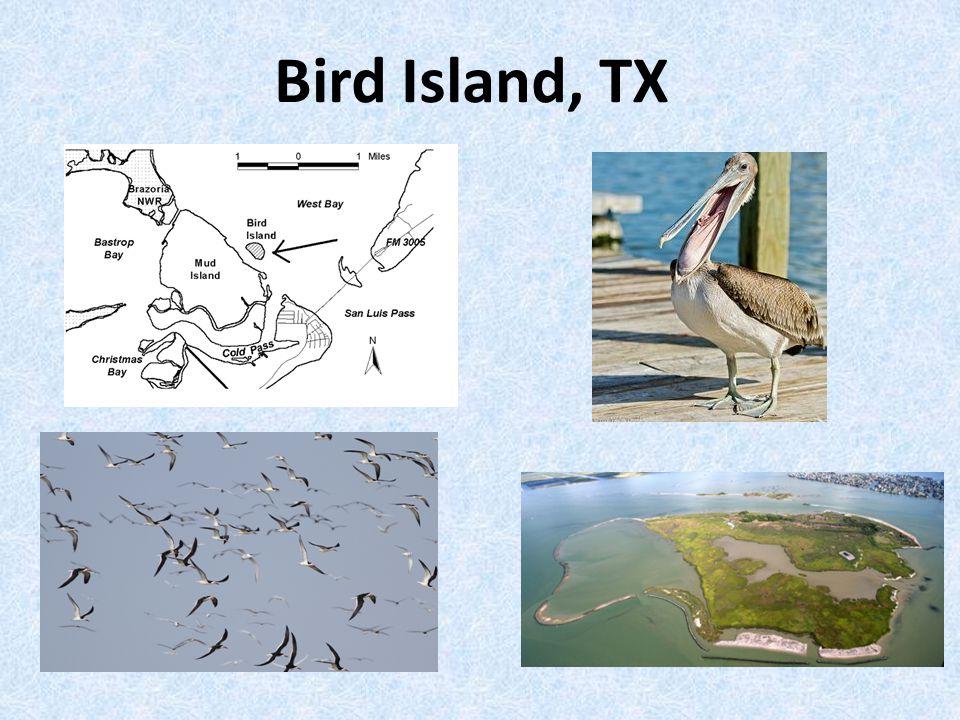Bird Island, TX