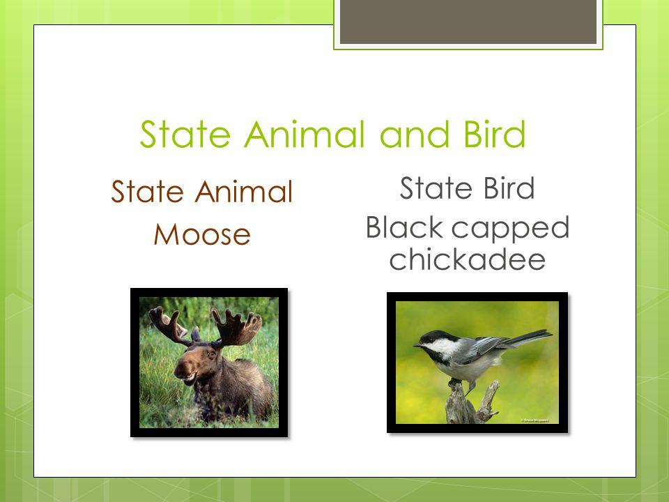 State Animal and Bird State Animal Moose State Bird Black capped chickadee