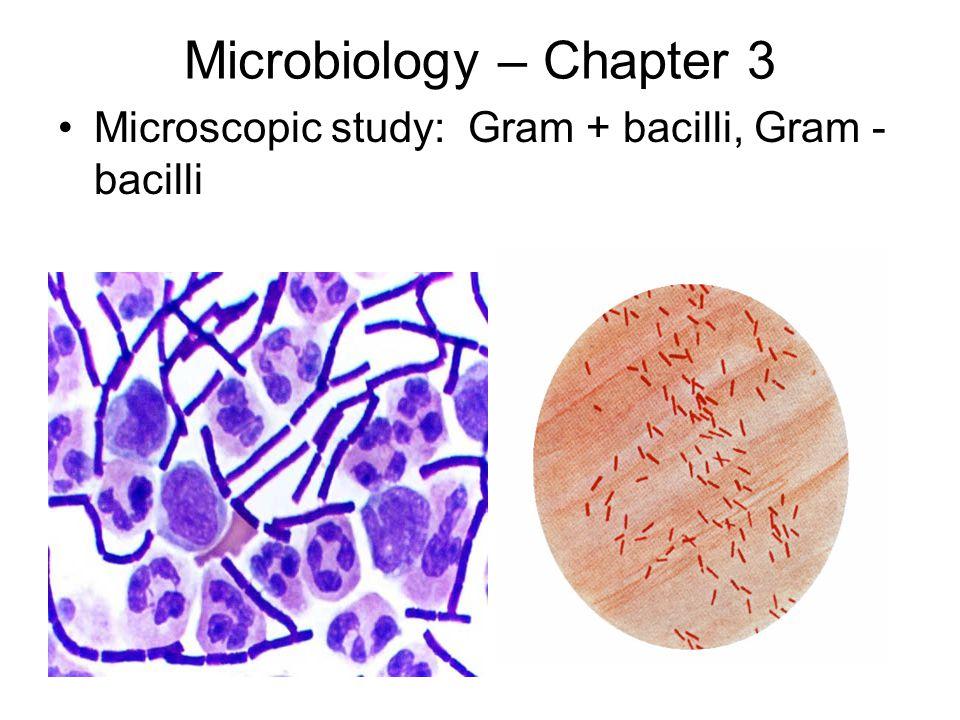 Microbiology – Chapter 3 Microscopic study: Gram + bacilli, Gram - bacilli