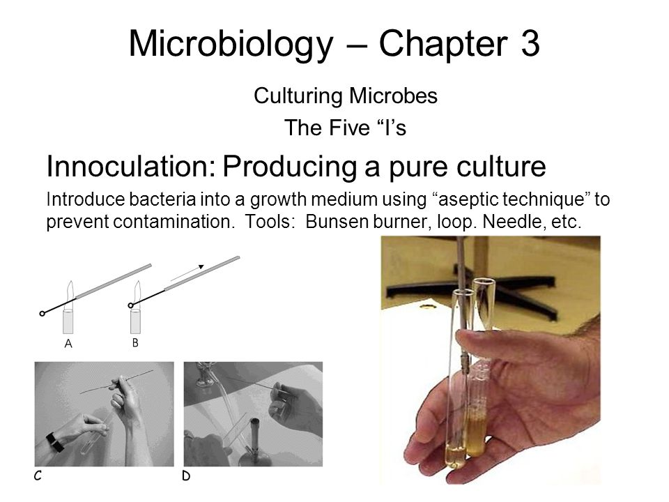 Microbiology – Chapter 3 Culturing Microbes The Five I's Innoculation: Producing a pure culture Introduce bacteria into a growth medium using aseptic technique to prevent contamination.