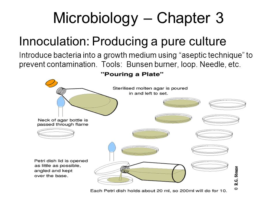 """Microbiology – Chapter 3 Innoculation: Producing a pure culture Introduce bacteria into a growth medium using """"aseptic technique"""" to prevent contamina"""