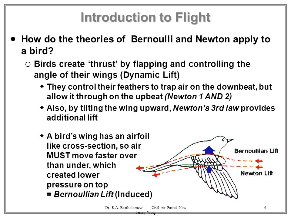 Dr. R.A. Bartholomew - Civil Air Patrol, New Jersey Wing 6 Introduction to Flight  How do the theories of Bernoulli and Newton apply to a bird?  Bir