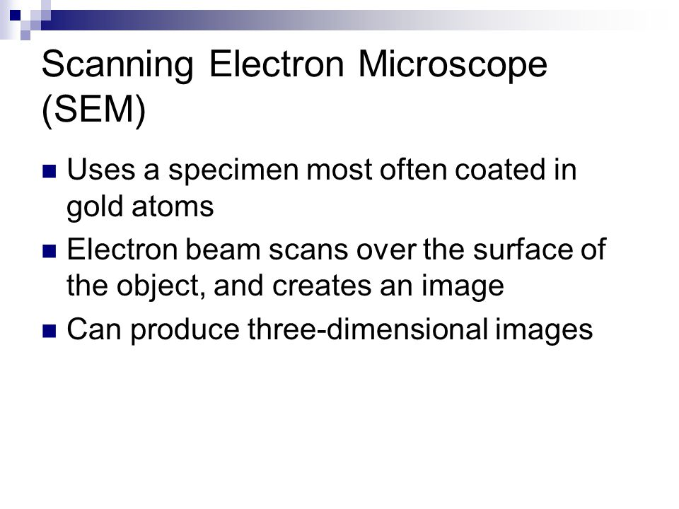 Scanning Electron Microscope (SEM) Uses a specimen most often coated in gold atoms Electron beam scans over the surface of the object, and creates an