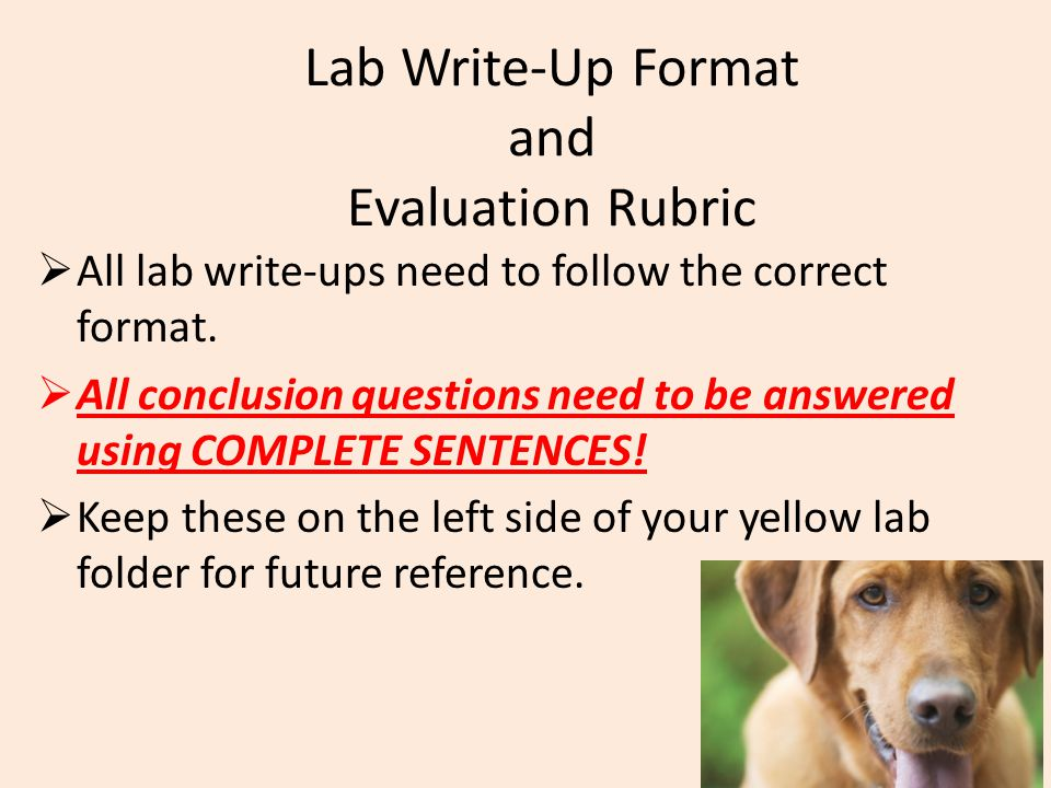 Lab Write-Up Format and Evaluation Rubric  All lab write-ups need to follow the correct format.  All conclusion questions need to be answered using