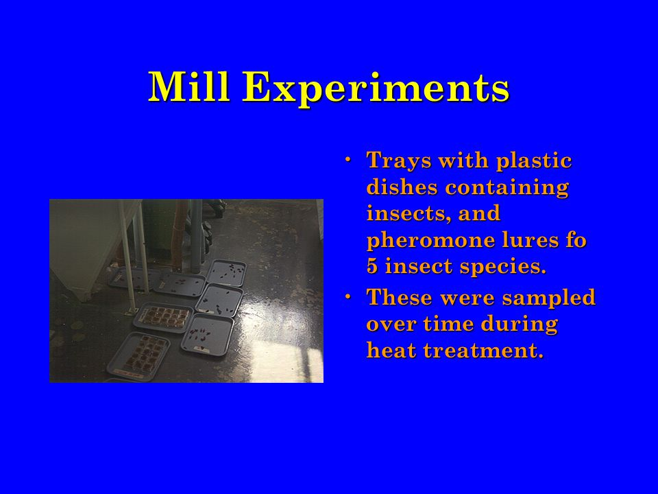 Mill Experiments Trays with plastic dishes containing insects, and pheromone lures fo 5 insect species.