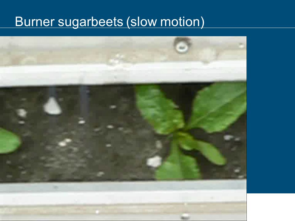 Burner sugarbeets (slow motion)