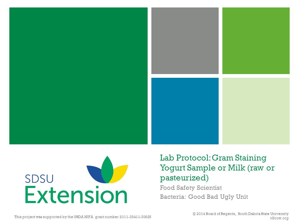 Lab Protocol: Gram Staining Yogurt Sample or Milk (raw or pasteurized) Food Safety Scientist Bacteria: Good Bad Ugly Unit © 2014 Board of Regents, Sou