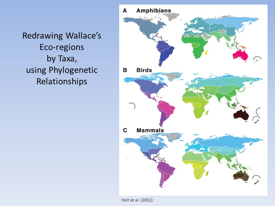 Holt et al. (2012) Redrawing Wallace's Eco-regions by Taxa, using Phylogenetic Relationships