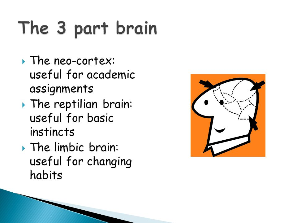  The neo-cortex: useful for academic assignments  The reptilian brain: useful for basic instincts  The limbic brain: useful for changing habits