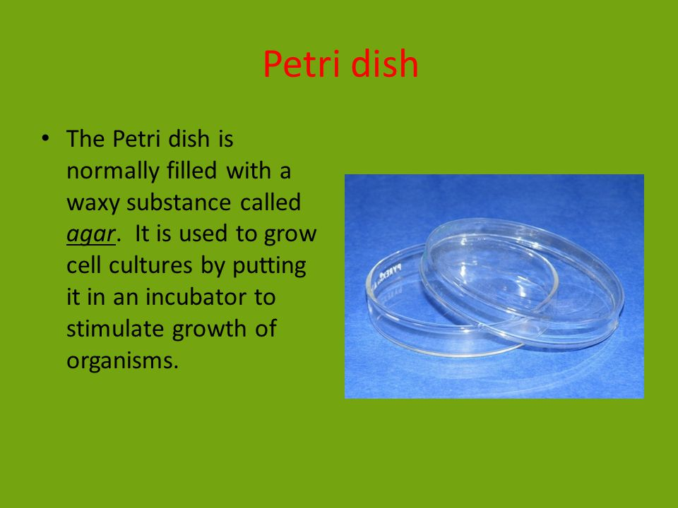 Petri dish The Petri dish is normally filled with a waxy substance called agar.