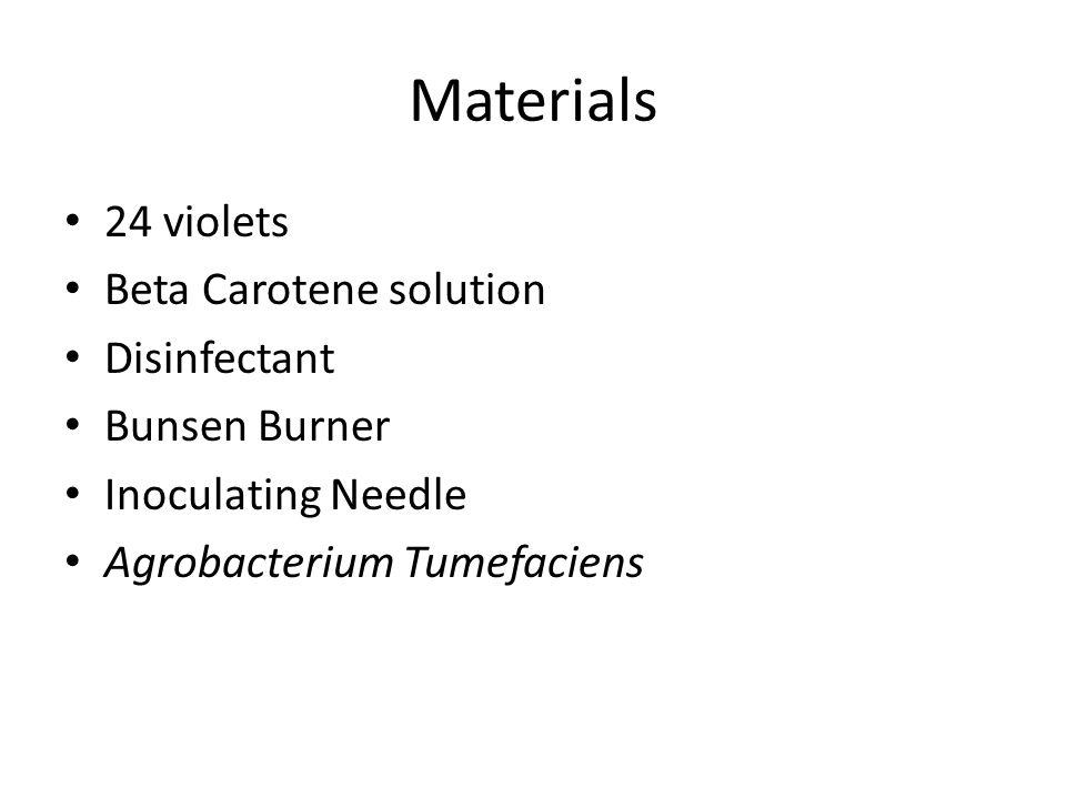 Materials 24 violets Beta Carotene solution Disinfectant Bunsen Burner Inoculating Needle Agrobacterium Tumefaciens