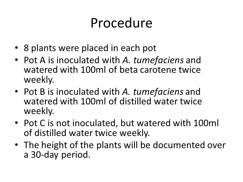 Procedure 8 plants were placed in each pot Pot A is inoculated with A. tumefaciens and watered with 100ml of beta carotene twice weekly. Pot B is inoc