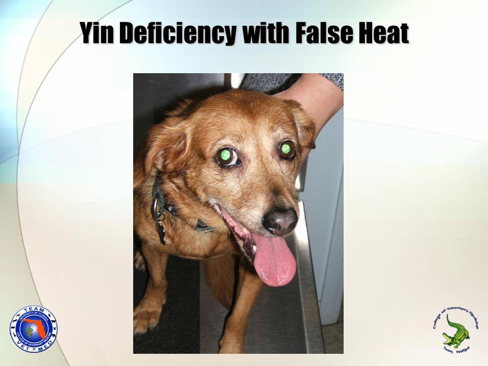 Yin Deficiency with False Heat